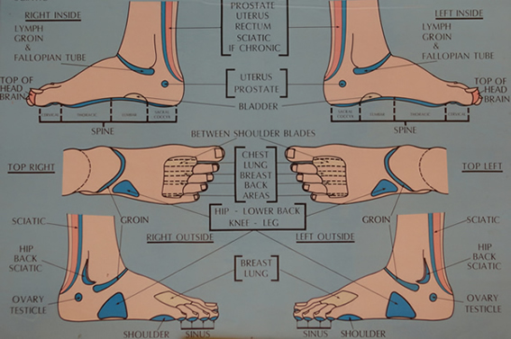 Foot Reflexology Chart